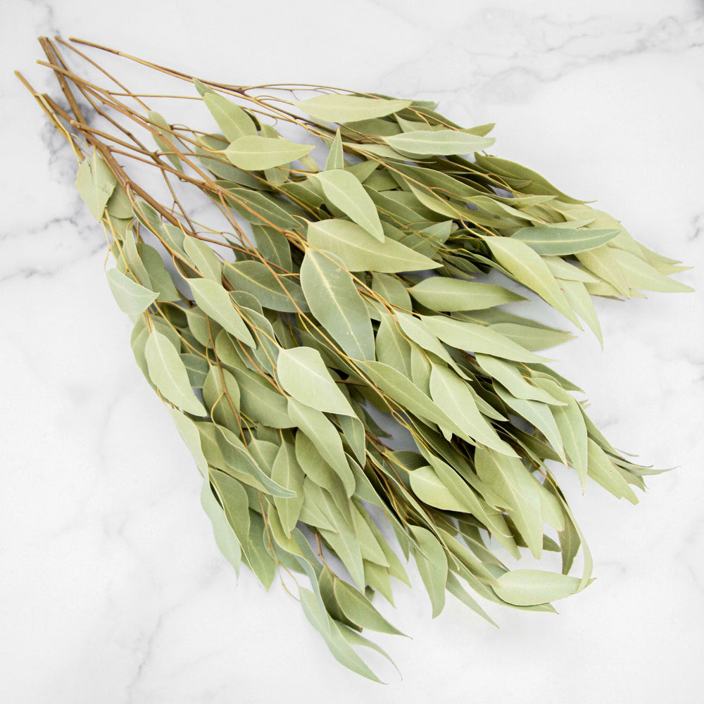 Dried Eucalyptus Branch
