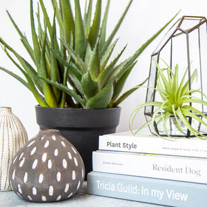 Load image into Gallery viewer, Faux Air Plant - 8.5""