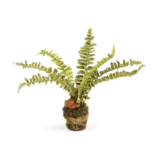 Load image into Gallery viewer, Boston Fern 7.5