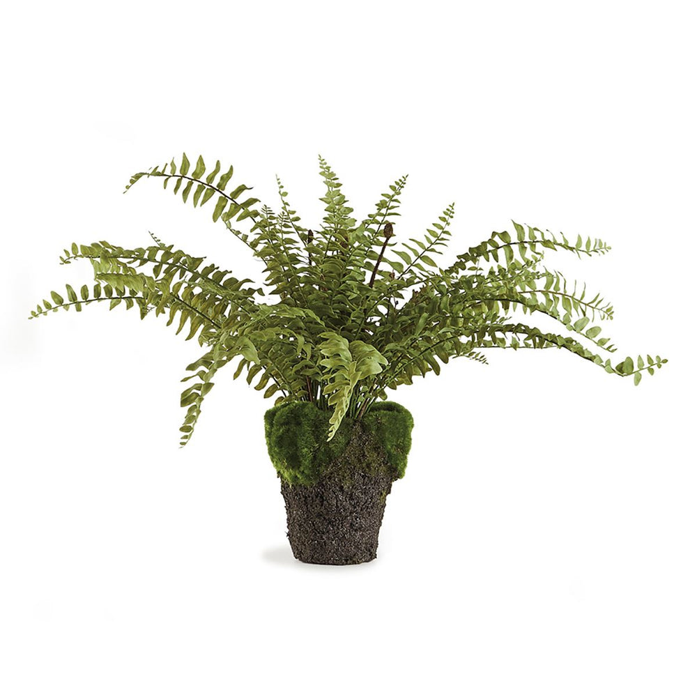 "16"" Realistic Boston Fern"