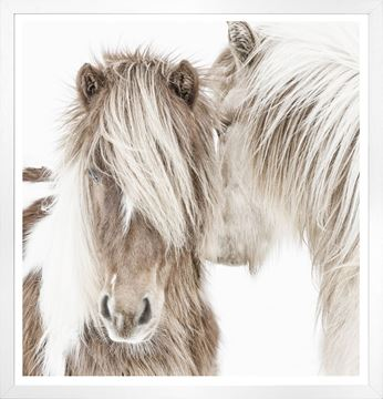Nuzzling Ponies Art in White Frame