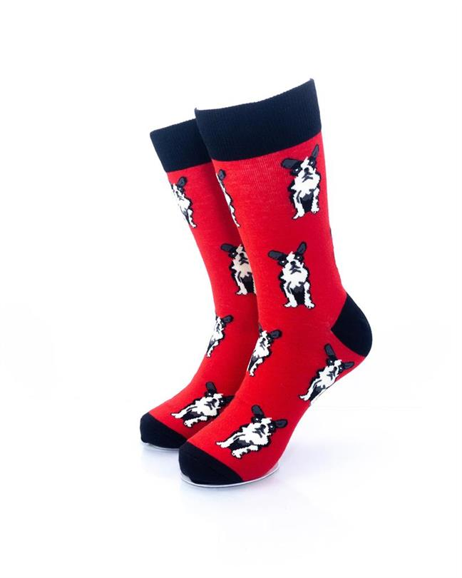 cooldesocks boston terrier crew socks front view