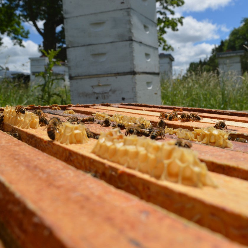 The Blessing of Beekeeping Where 4 Uniquely Distinct Seasons Exist