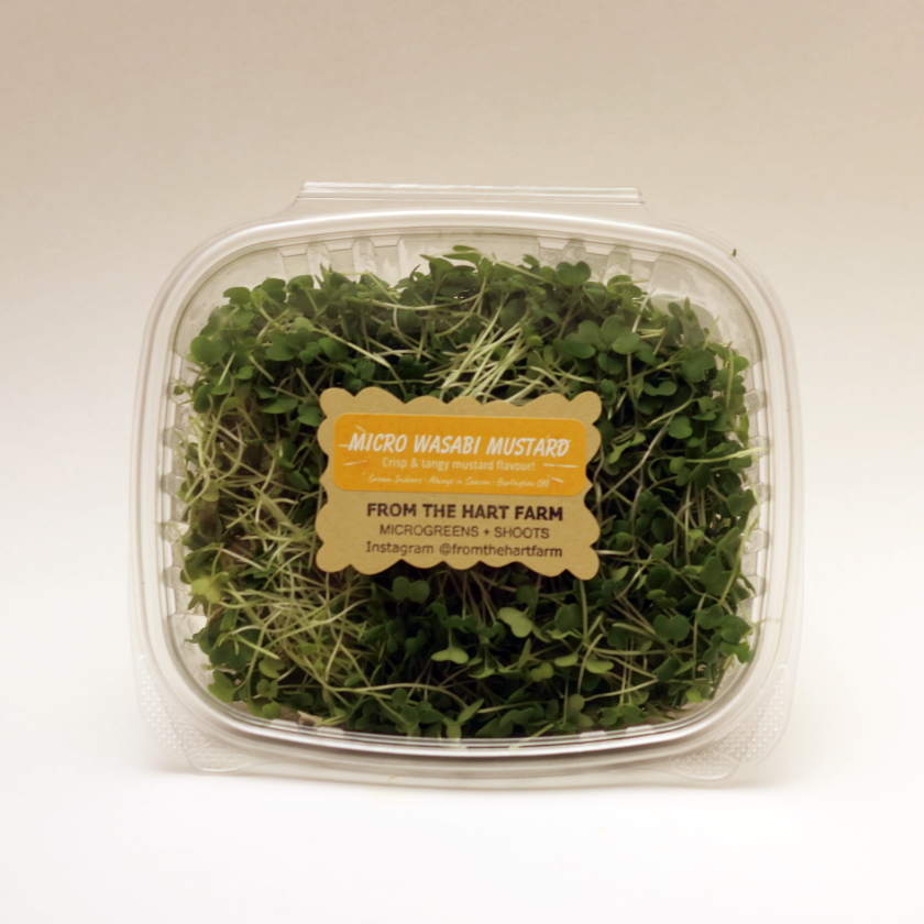 Cut Microgreens | From The Hart Farm