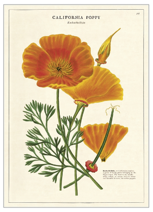 California Poppy Print