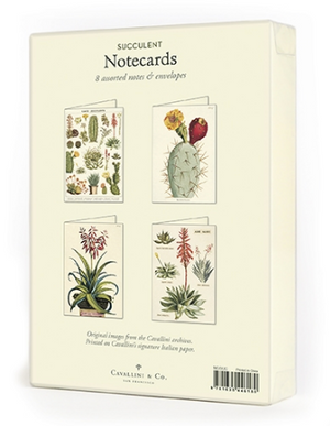 Succulents Boxed Note Cards