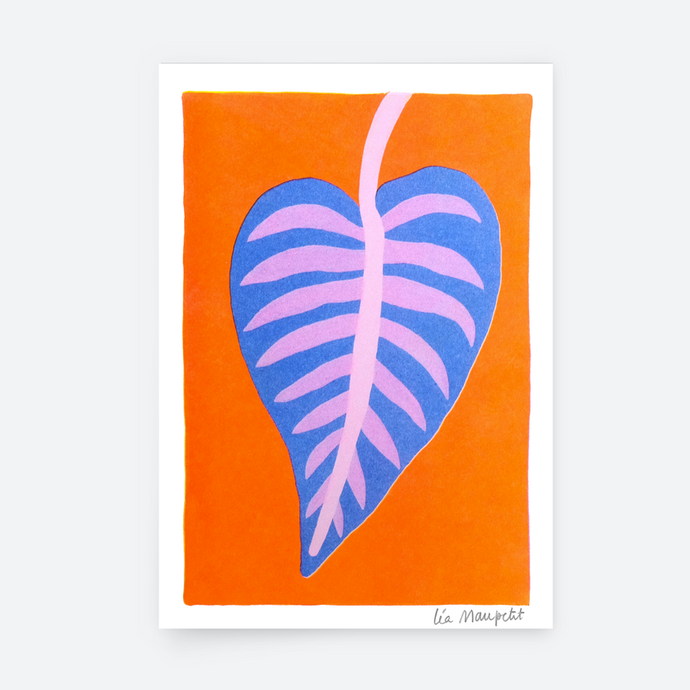 ILLUSTRATION - CALATHEA -