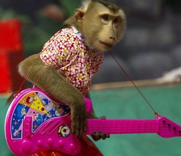 Monkey playing a toy guitar