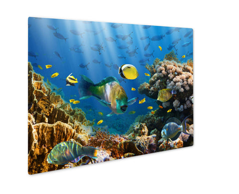 Metal Panel Print, Coral And Fish In The Red Sea Egypt - the-american-pandaa