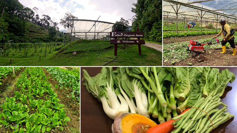 Collaboration with Father's Organic Farm