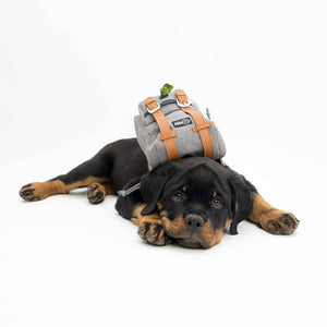 Dog Backpack with Harness and Leash Attachable - Petgo Wholesale