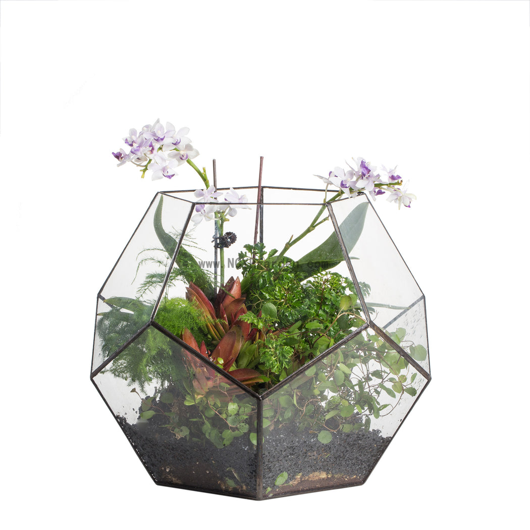 Handmade Extra Large Large Pentagon Glass Geometric Terrarium for Succulents Fern Moss Airplants - NCYPgarden