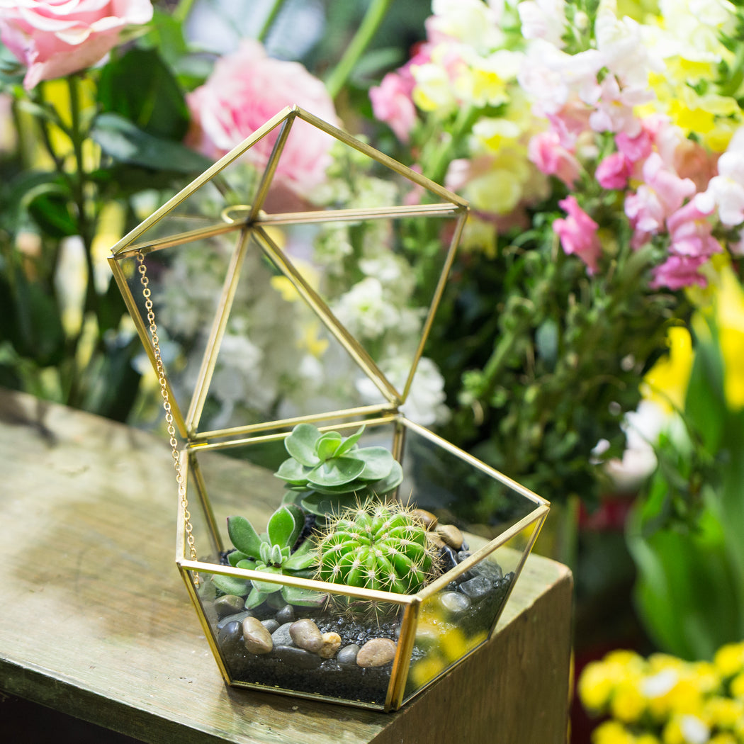 Modern Glass Geometric Terrarium Five Sides Tabletop Display Box for Succulent Fern Moss Plant - NCYPgarden
