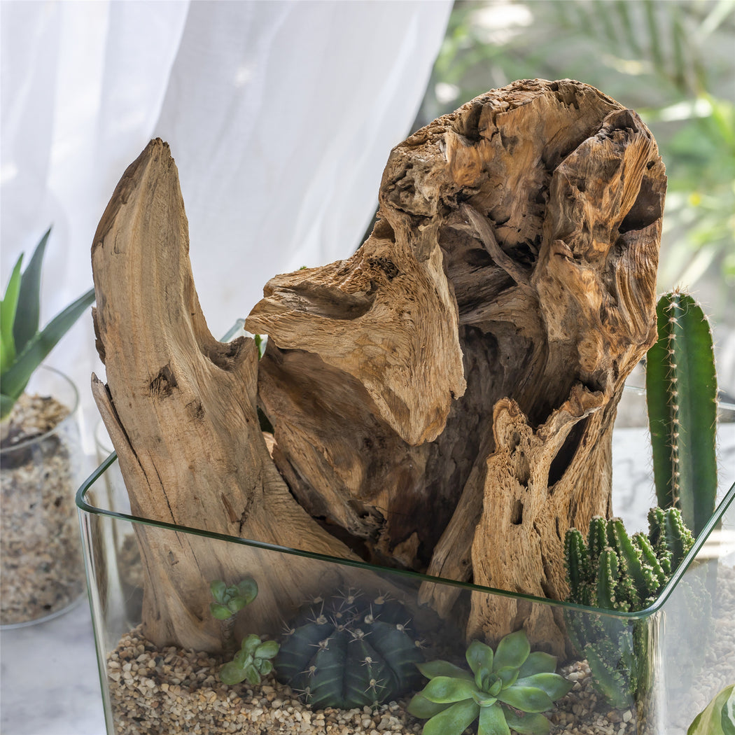 Natural Driftwood Bogwood for Terrarium Succulents Landscaping Air Plants Reptile Miniature Habitat - NCYPgarden