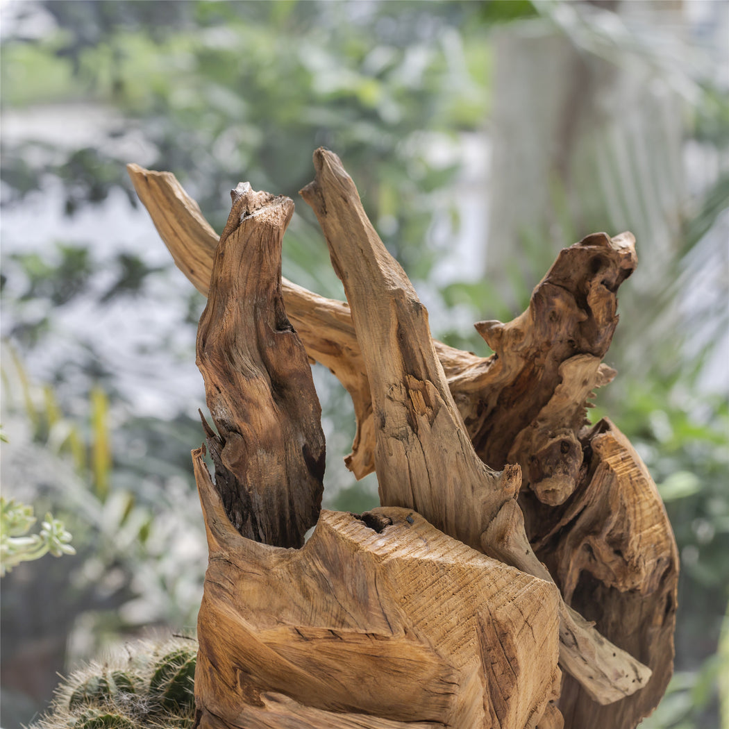 Natural Driftwood Bogwood Branches Set for Landscaping Design Air Plants Miniature Reptile Habitat - NCYPgarden