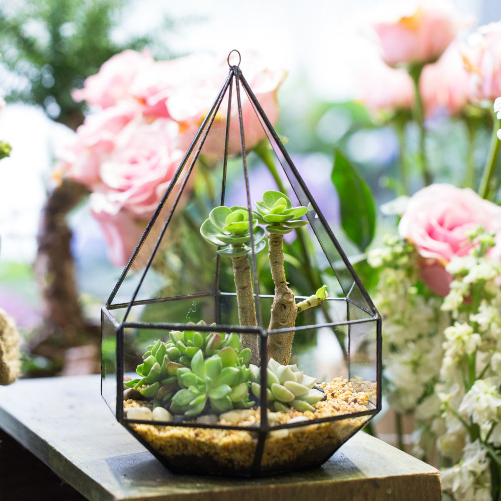 Hanging Six-surface Diamond Glass Geometric Terrarium Wall Mount Hanging Planter with 3 Opening - NCYPgarden