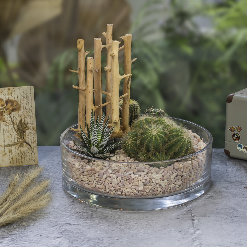 Natural Pricky Driftwood and Stone for Aquarium Terrarium Landscape Ornament Succulents Cacti - NCYPgarden