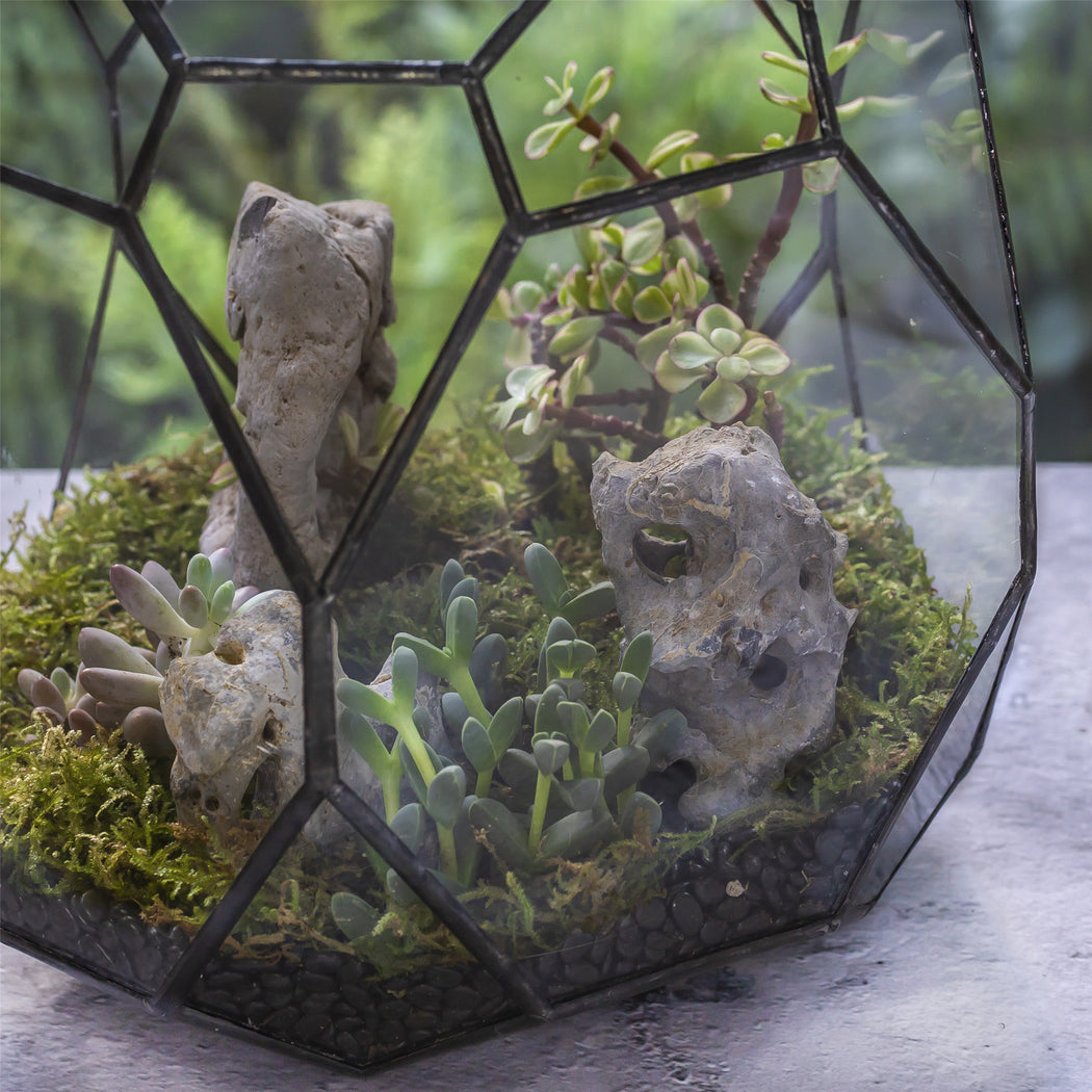 Small Natural Lake Stone with Various Shapes for Landscape Aquarium Bonsai Garden Succulents Cacti - NCYPgarden
