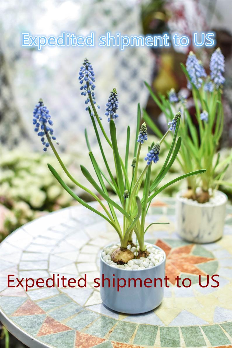 Expedited shipment to US, 2-4 workdays, 7USD, Reserved - NCYPgarden