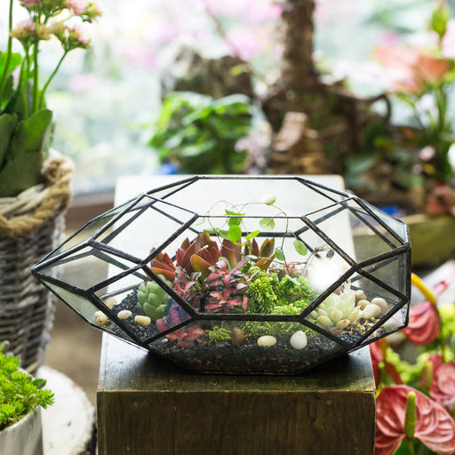 "Handmade 11"" Height Long Irregular Oval Geometric Glass Terrarium Lantern for Fern Moss Succulents - NCYPgarden"