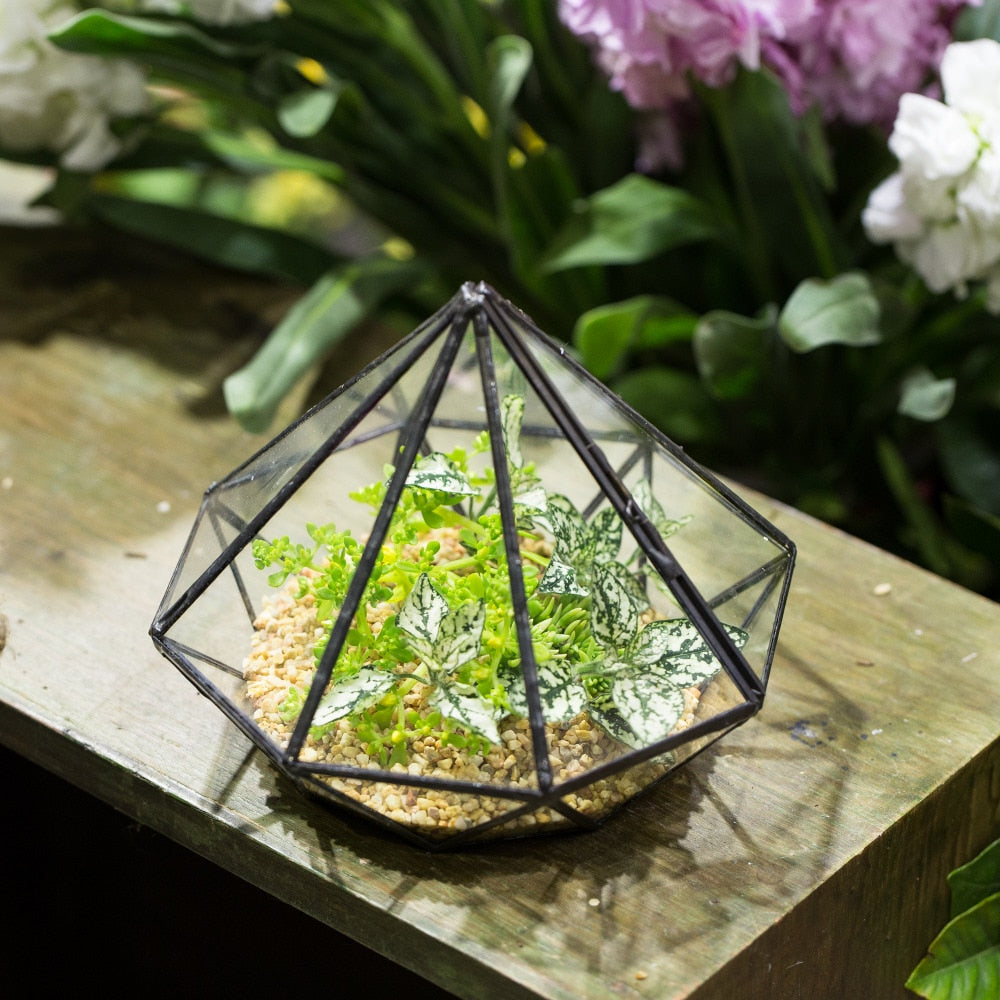 Handmade Diamond Black Glass Geometric Terrarium with Door for Succulents Moss Airplants - NCYPgarden