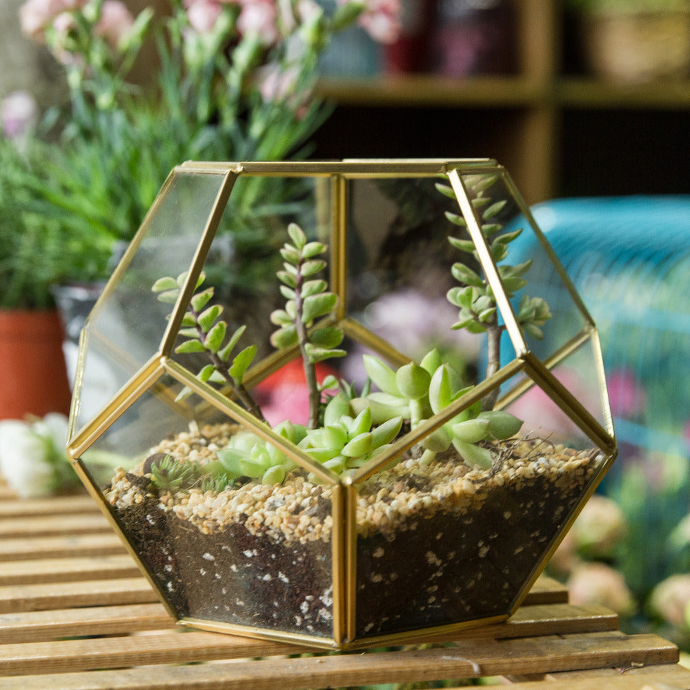 Handmade Gold Pentagon Geometric Glass Terrarium for Succulent Moss Airplants Wedding - NCYPgarden
