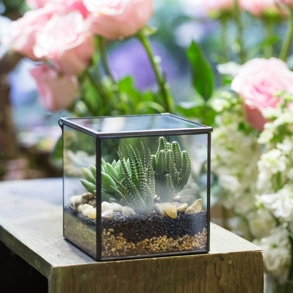 Handmade Square Glass Geometric Terrarium with Lid for Fern Moss Succulents Cacti - NCYPgarden