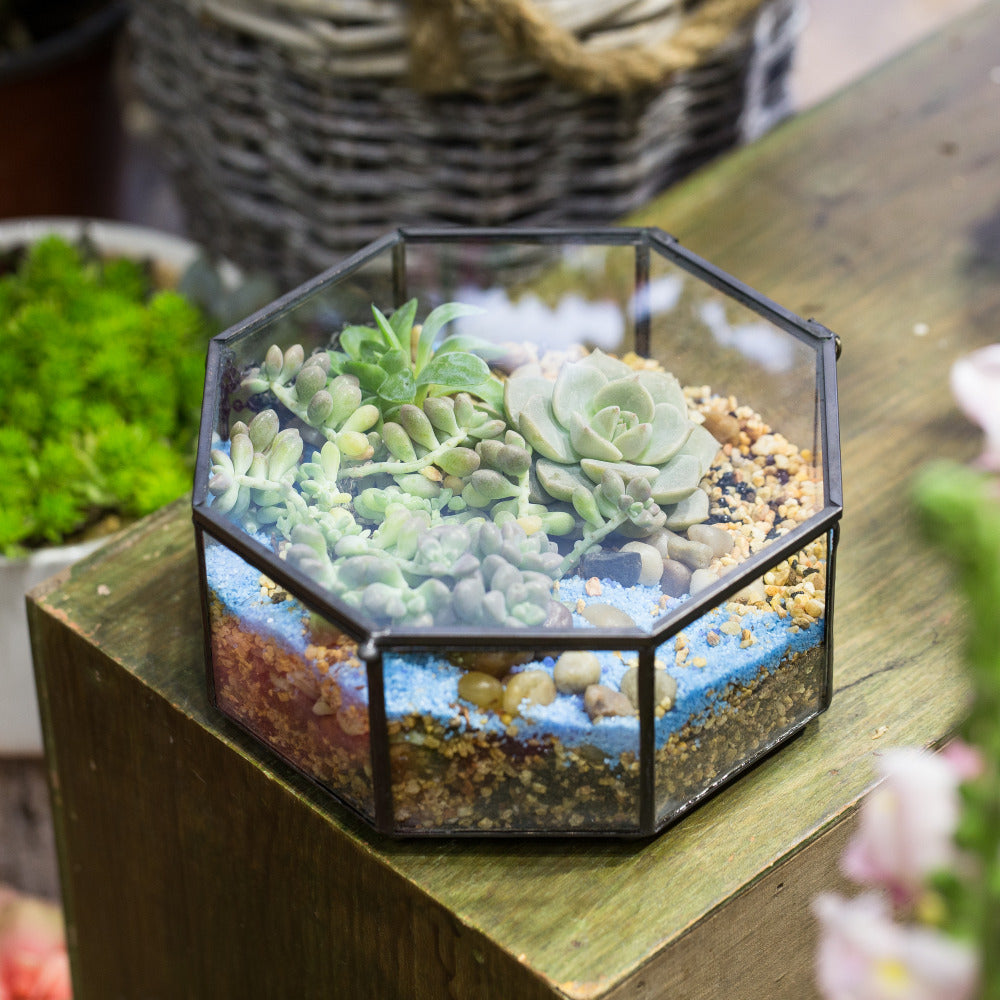 Handmade Flat Octagon Glass Geometric Terrarium for Succulents Fern Moss - NCYPgarden