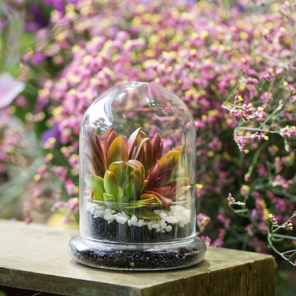 Blown 2 Piece Glass Cloche Dome Cover Terrarium Container with Without Airhole for Venus Flytrap - NCYPgarden