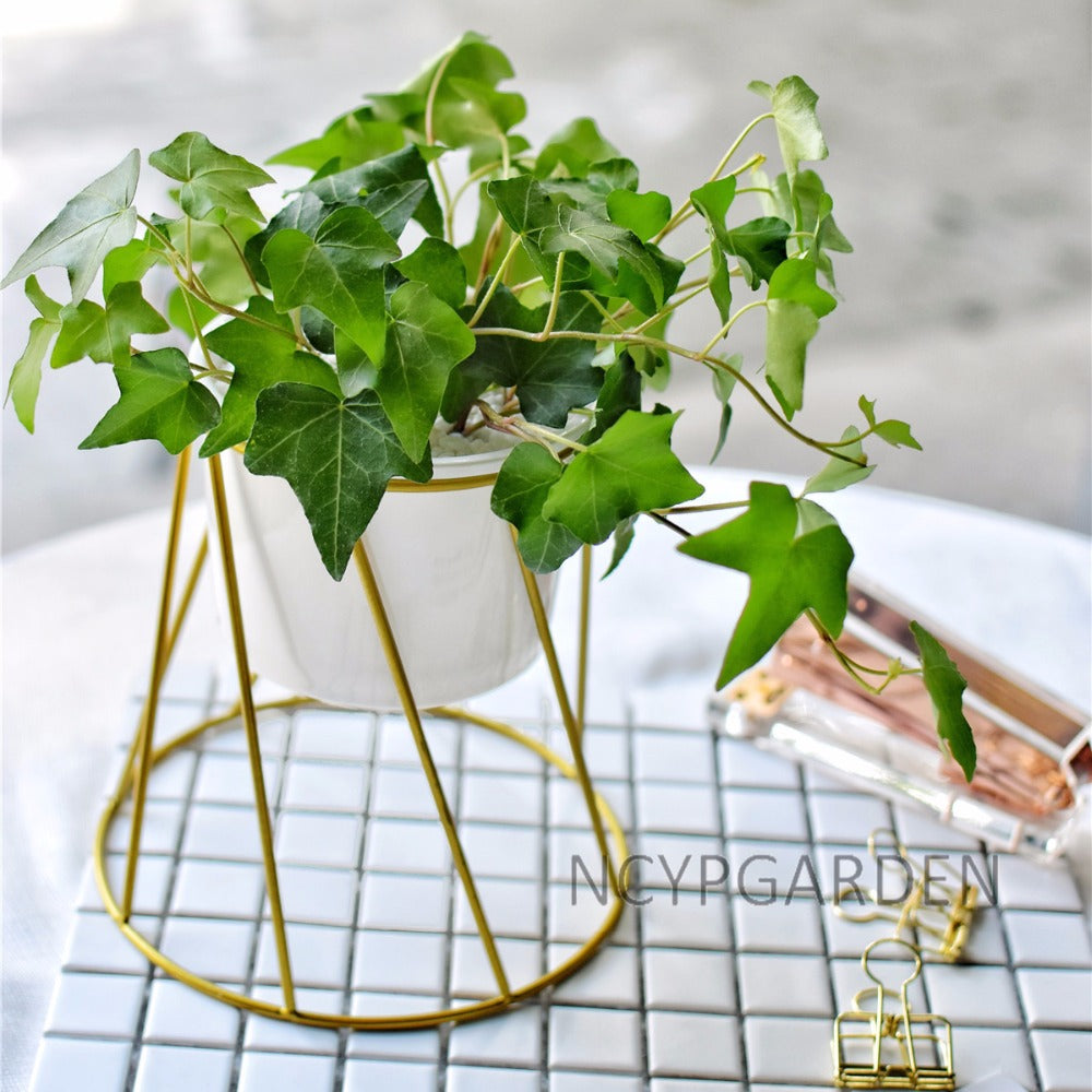 Gold Iron Rack Holder with White Ceramic Planter for Succulents Cactus Flower Plants Pot Decoration - NCYPgarden