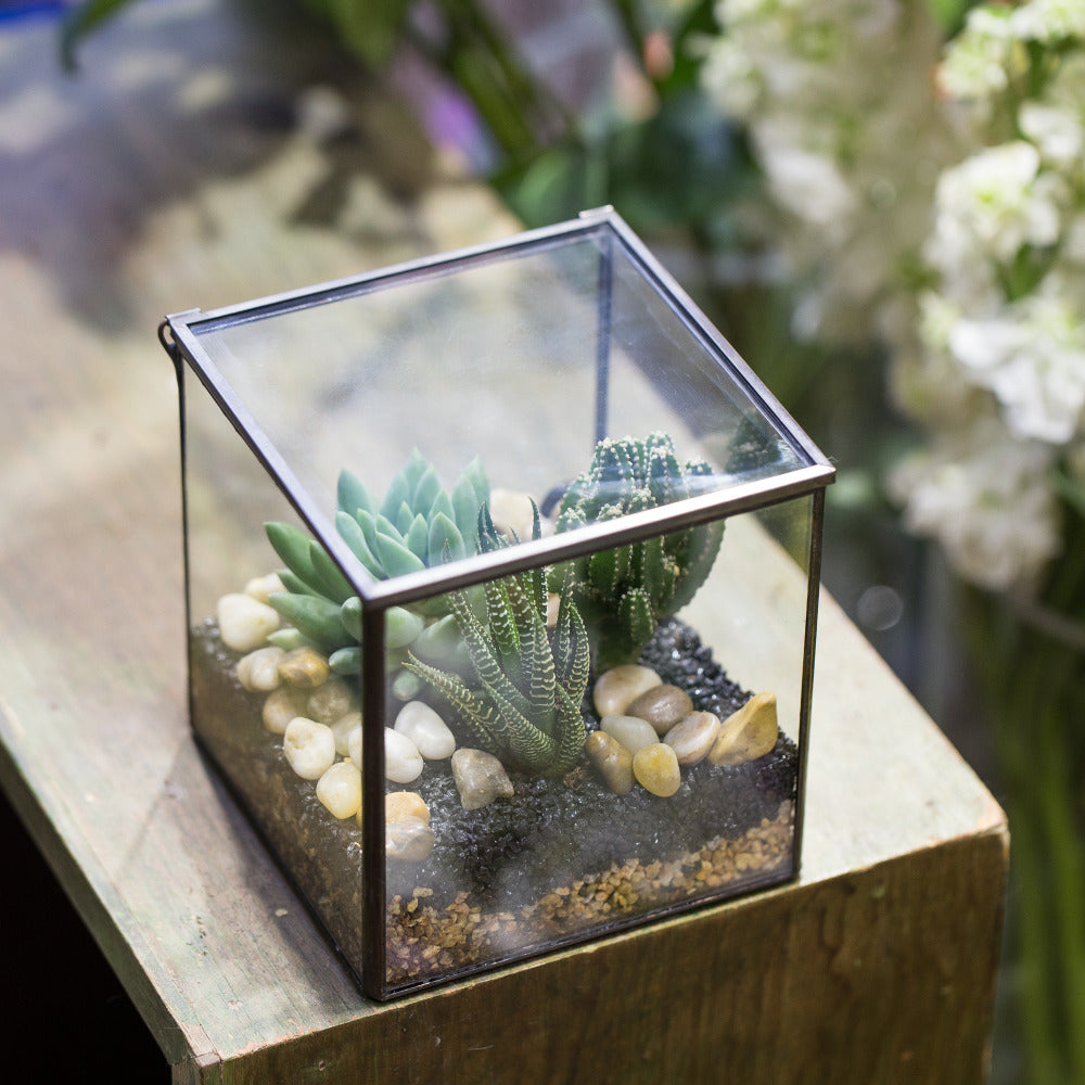Handmade Square Glass Geometric Terrarium Box with Lid for Succulents Fern Moss - NCYPgarden