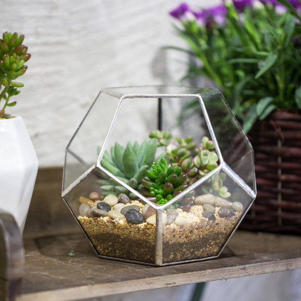 Handmade Silver Black Various Size Pentagon Glass Geometric Terrarium for Succulents Airplants Cacti - NCYPgarden