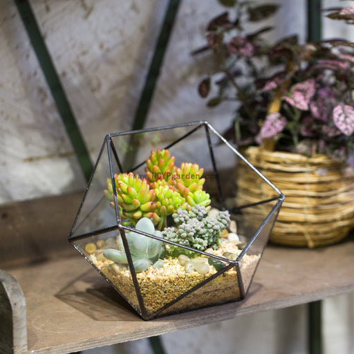 Handmade Bowl Shape Geometric Glass Terrarium for Garden Plants Succulents Moss Airplants - NCYPgarden