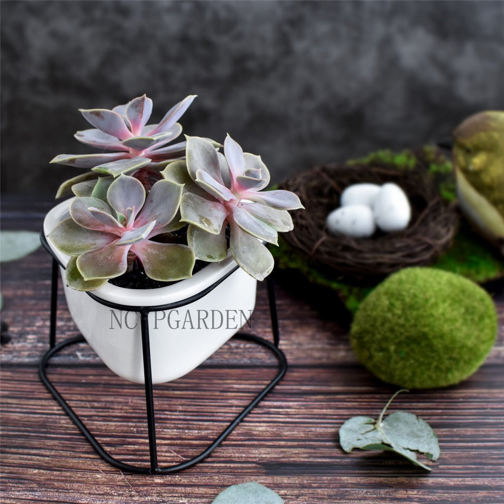 Small Black Gold Triangular Iron Rack Holder with White Round Ceramic Pot Planter Desktop Flower Pot - NCYPgarden