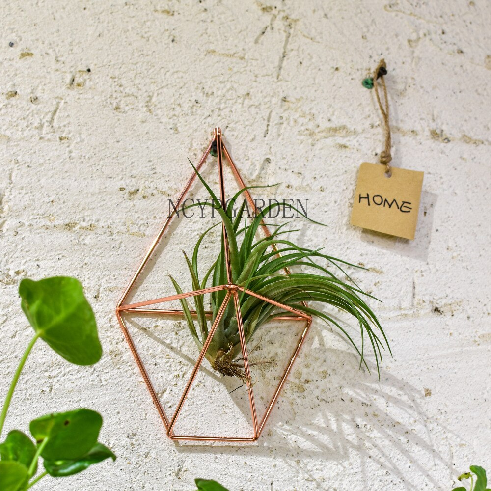 Rustic Wall Mount Hanging Geometric Metal Tillandsia Air Plants Holder Iron Rack Black Wall Accent - NCYPgarden