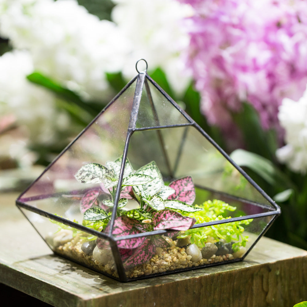 Handmade Black Vertebral Hanging Geometric Glass Terrarium for Succulent Fern Moss - NCYPgarden