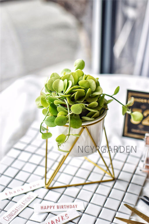 Gold Iron Rack Holder with White Ceramic Pot Planter for Succulents Herbs Cactus - NCYPgarden