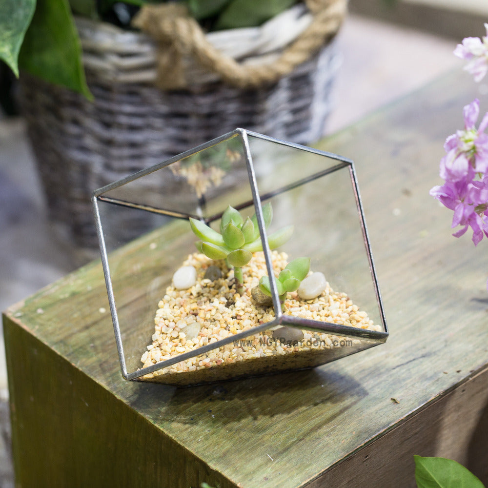 "Handmade 3.93"" / 10cm Silver Square Inclined Cube Glass Geometric Terrarium for Succulent  Airplants - NCYPgarden"