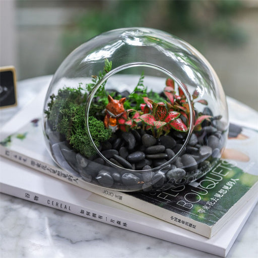 Hand Blown Glass Bubble Shape Globe Terrarium for Miniature Micro Landscape Airplants Moss - NCYPgarden