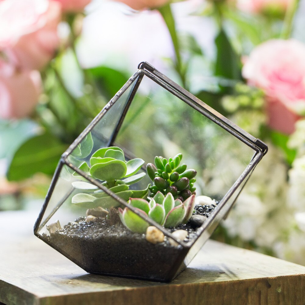 Handmade 10cm / 15cm Inclined Cube Glass Black Geometric Terrarium with Door for Succulent Moss - NCYPgarden