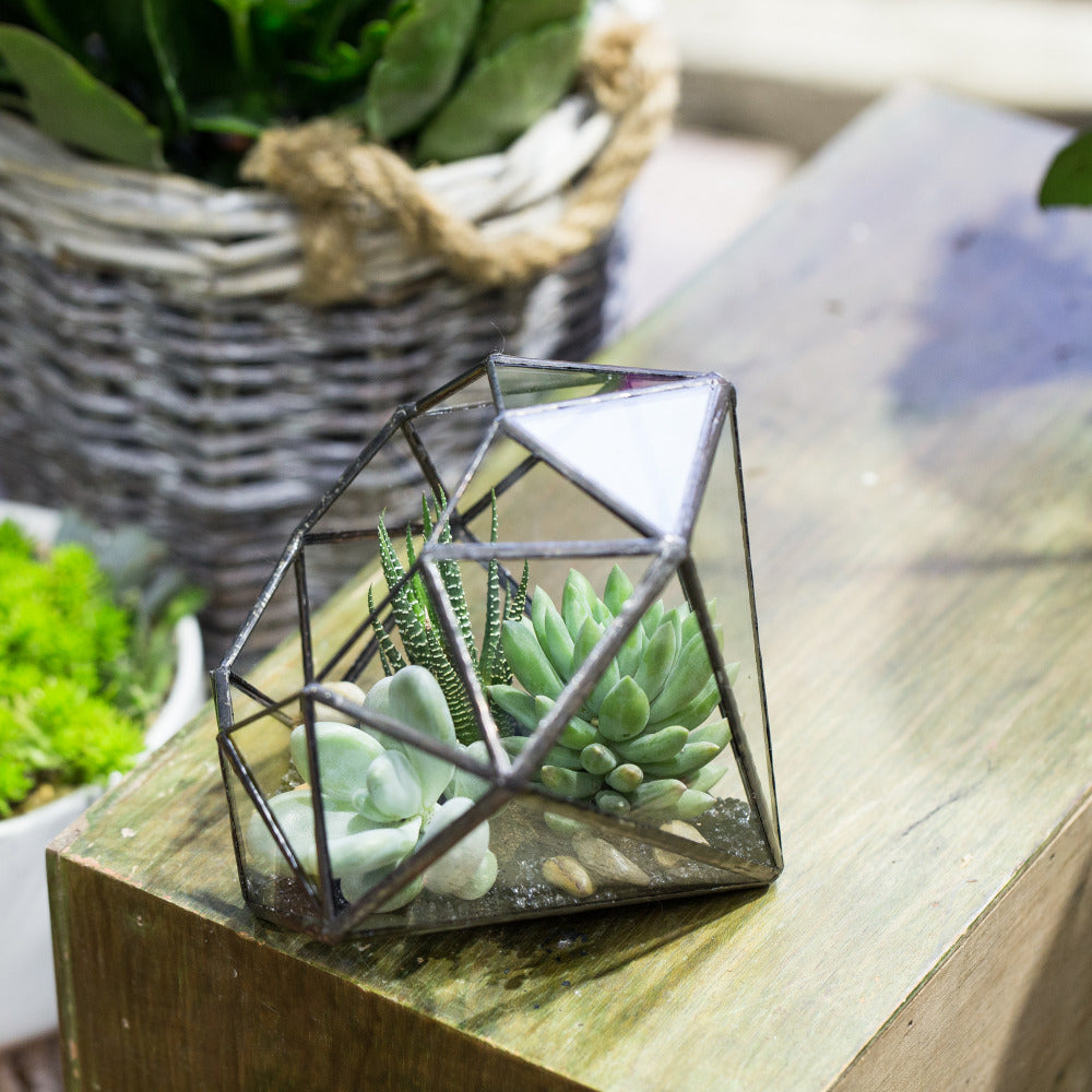 Handmade Diamond Open Glass Geometric Terrarium for Succulents Moss Fern Cacti - NCYPgarden