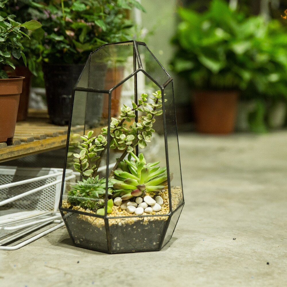 Handmade 25cm Irregular Tall Open Glass Geometric Terrarium Container for Succulents Wedding - NCYPgarden