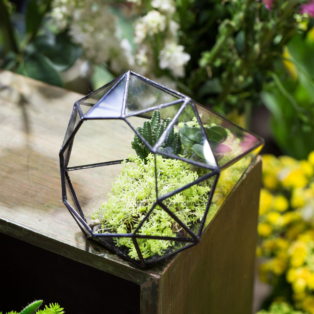Handmade Long Diamond Glass Geometric Terrarium for Succulent Airplants Cacti Moss - NCYPgarden