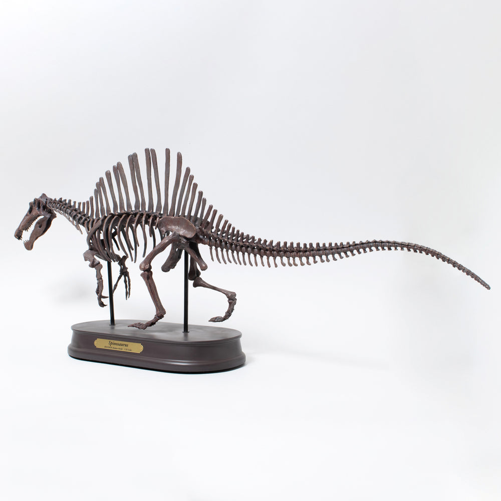 Load image into Gallery viewer, Spinosaurus Skeleton Model