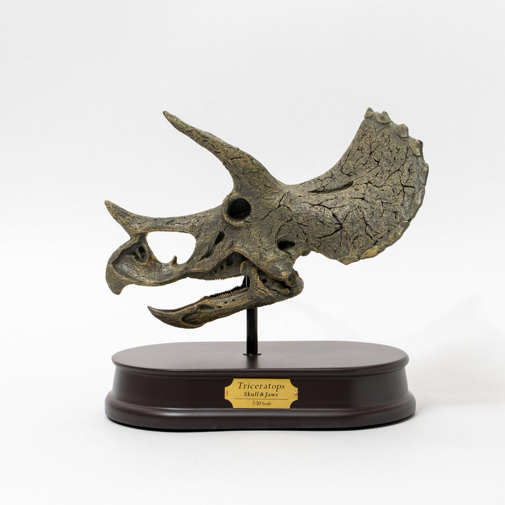 Load image into Gallery viewer, Triceratops Skull