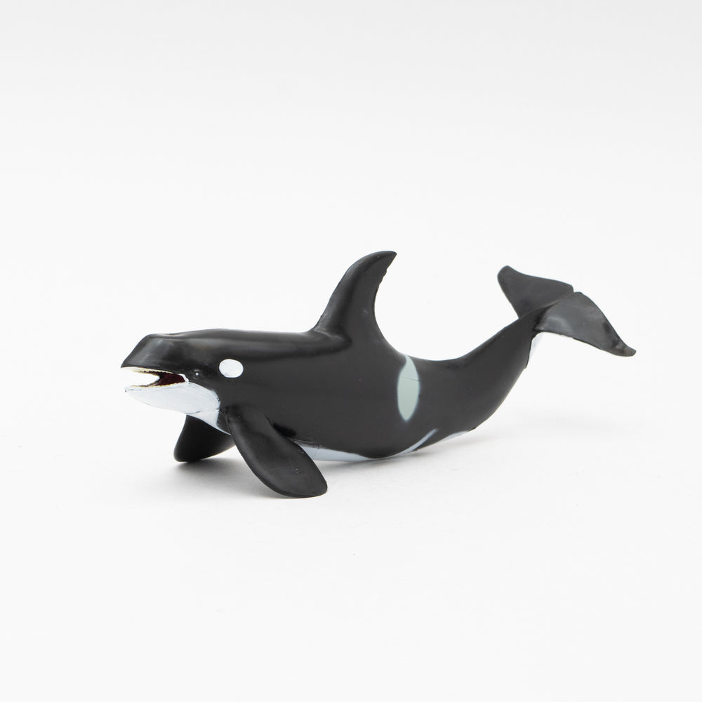 Great Killer Whale Soft Model