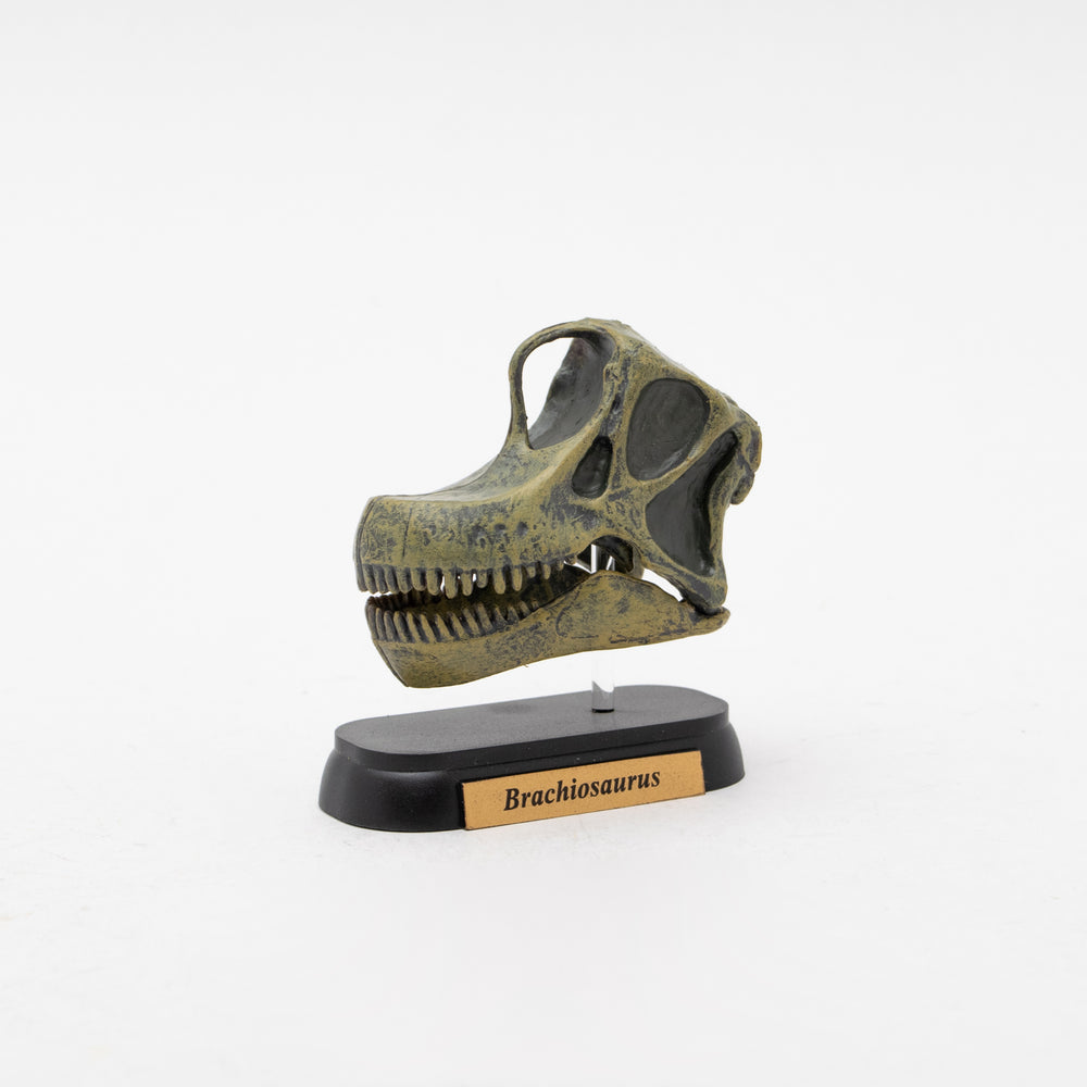 Brachiosaurus Skull Mini Model