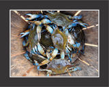 Basket Case Crab Wall Art - JWB Art Unlimited