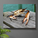 Buster the Crab Wall Art - JWB Art Unlimited