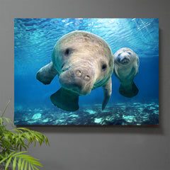 Hugh the Manatee Art Print or Canvas